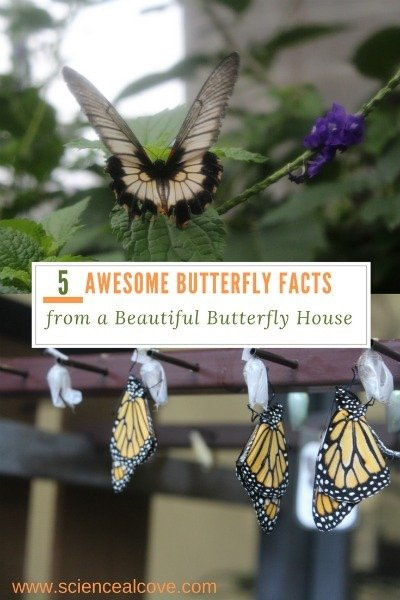 5 Awesome Butterfly Facts from a Beautiful Butterfly House