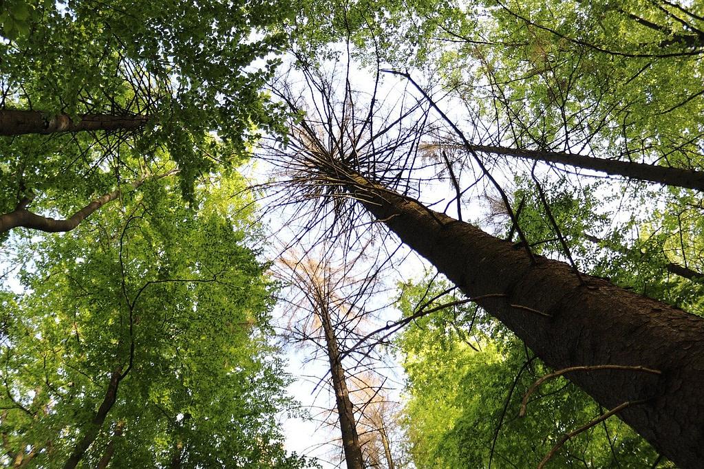 keep a snag or dead tree around