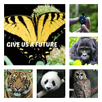 Top 10 Reasons to Care About Endangered Species