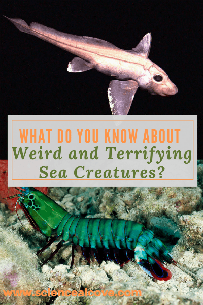 Try your hand at a quiz on all sea creatures terrifying. Read over my sea creatures posts if you want a head's up!