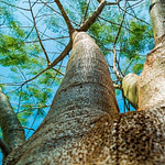 What More Do You Know about Amazing Tree Biology?