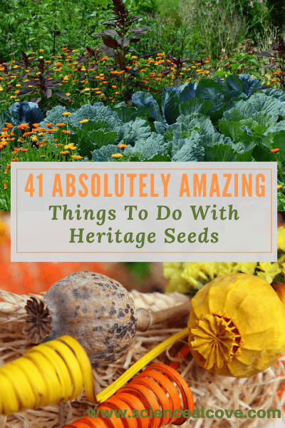 41 Absolutely Amazing Things To Do With Heritage Seeds